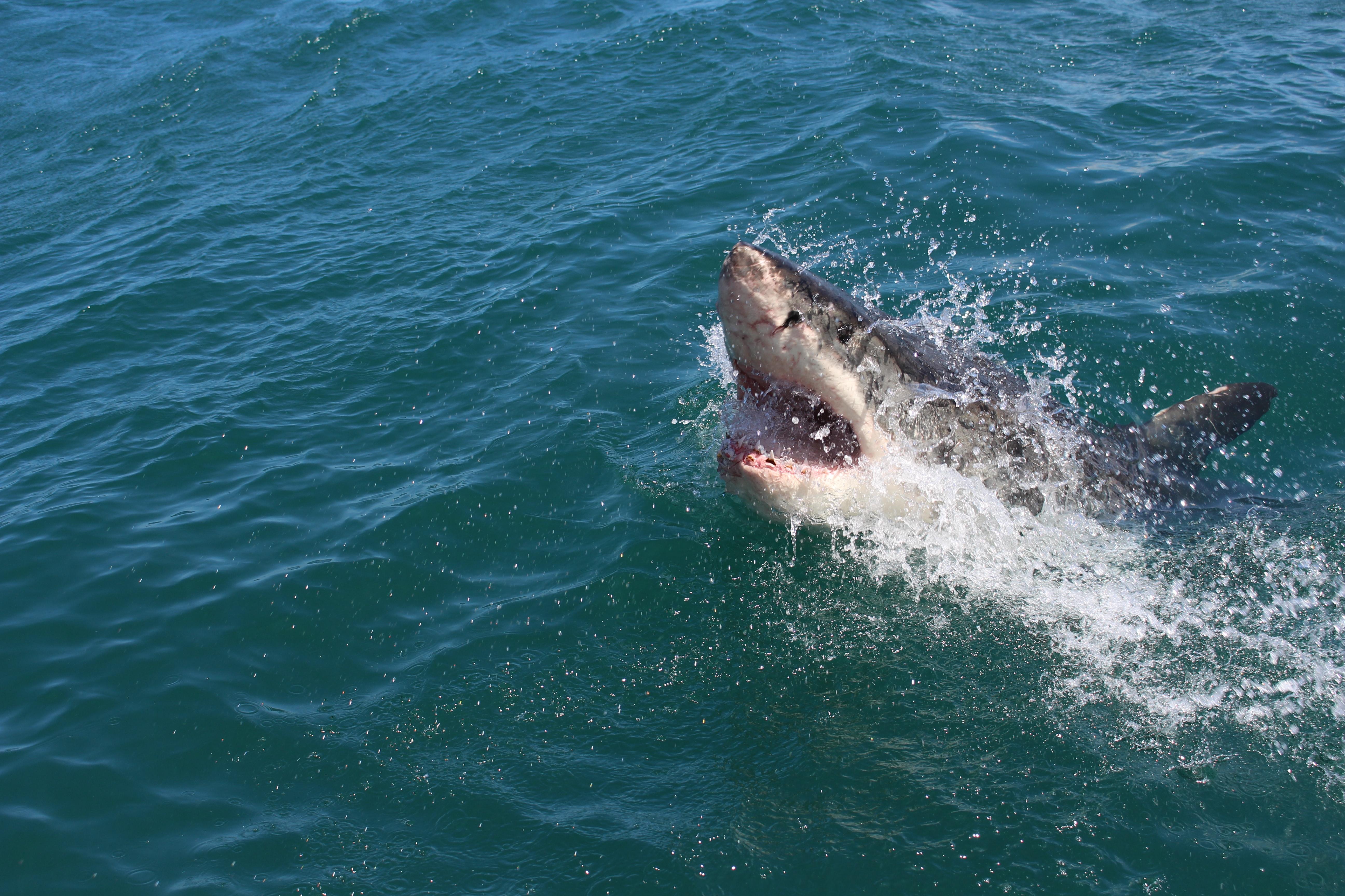 Trump Jumps the Shark