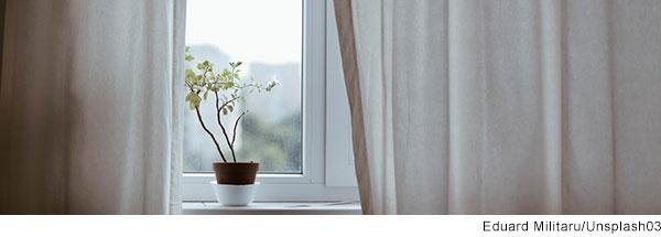 Einsame Pflanze auf einem Fensterbrett.