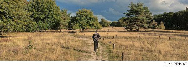 Ein Mensch läuft auf einem Weg zwischen Weiden mit Bäumen. Man sieht ihn von hinten.