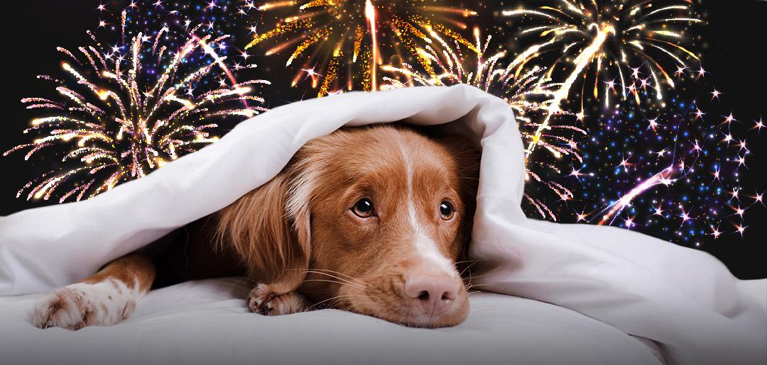 fireworks_aHumane_pets.jpg