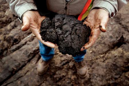 tar-sands-hands-40KB.jpg