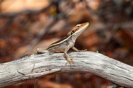 Crouching Lizard Hidden Grasshopper by Yvonne McKenzie