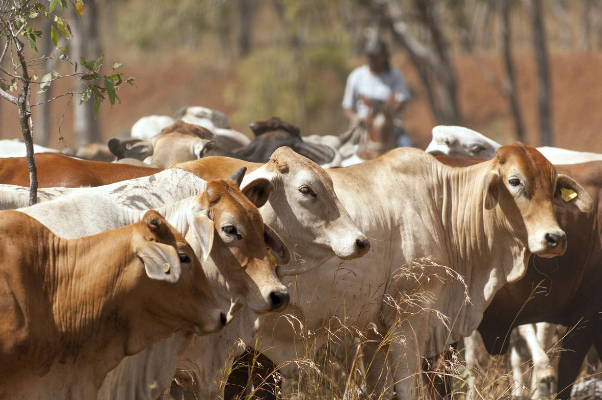 outback-leaders.jpg