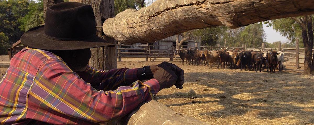 pastoralist-kerry.jpg