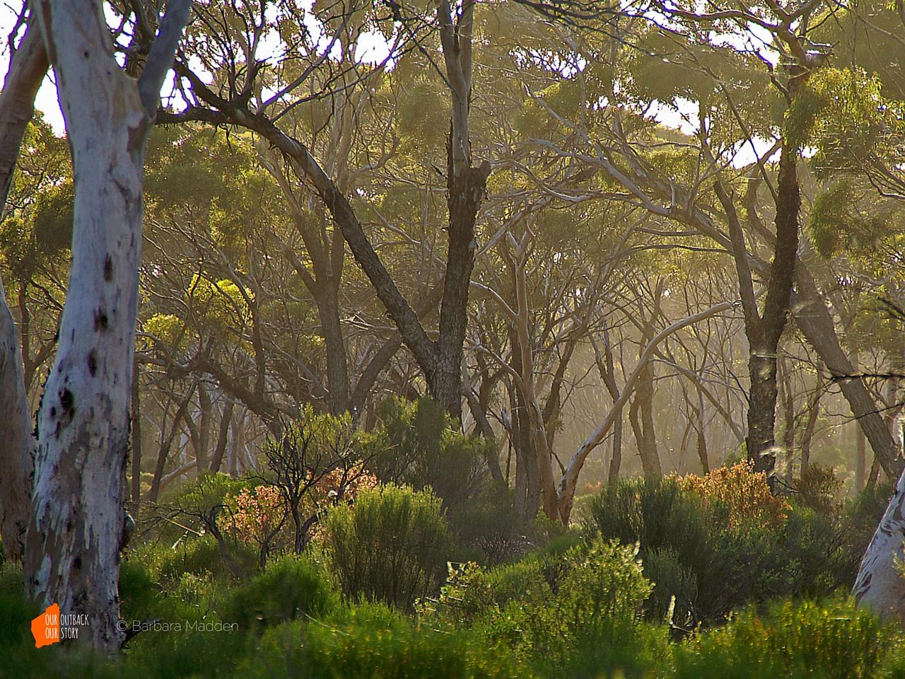Great_Western_Woodlands-Barbara_Madden