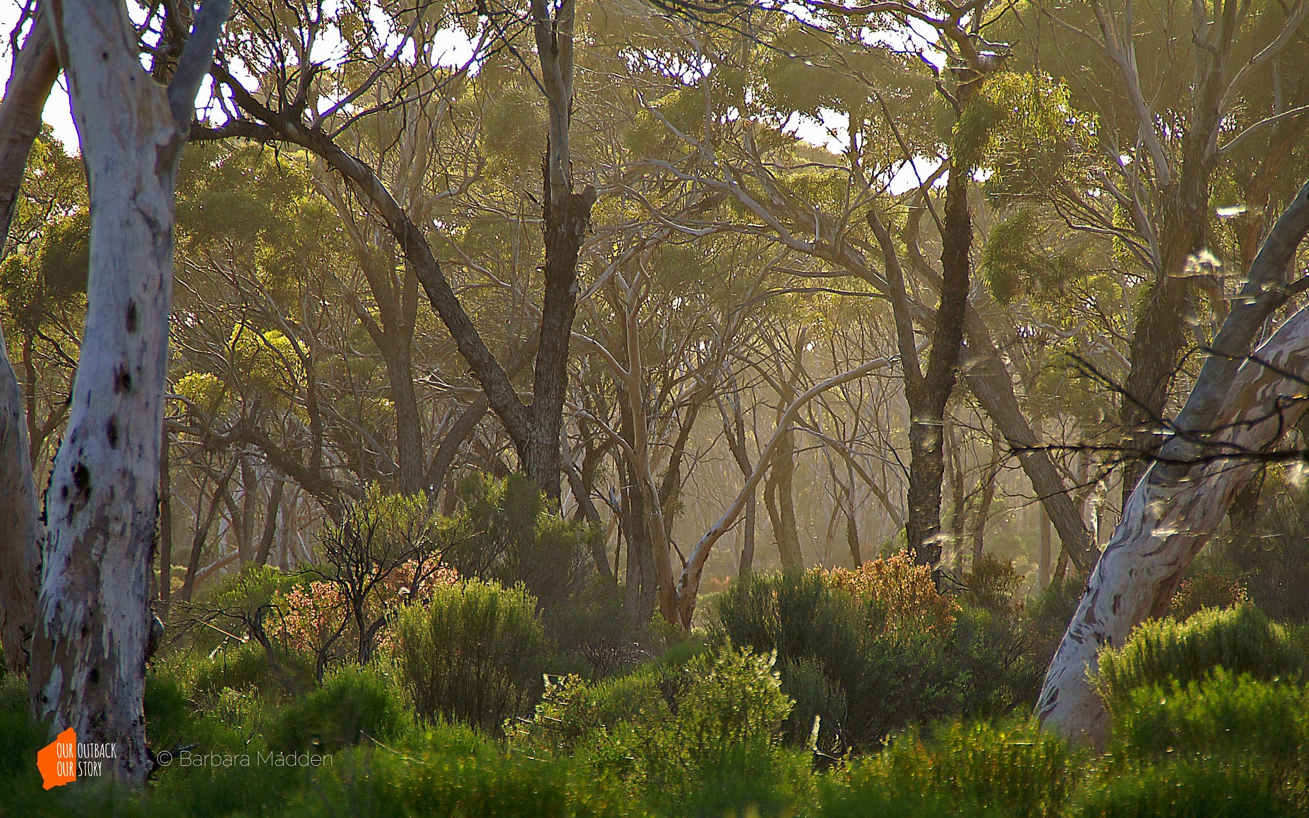 Great_Western_Woodlands-Barbara_Madden-wide