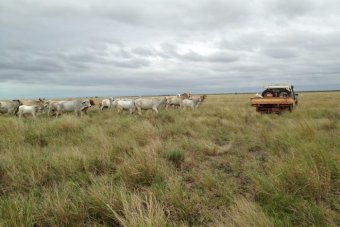 ABC News - Government proposes Rangelands Advisory Board