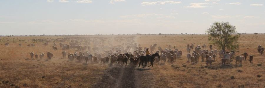 ABC News: New rangeland lease could see pastoralists shift focus