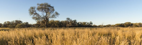 Carbon farming letter ups the ante on government over Outback reforms