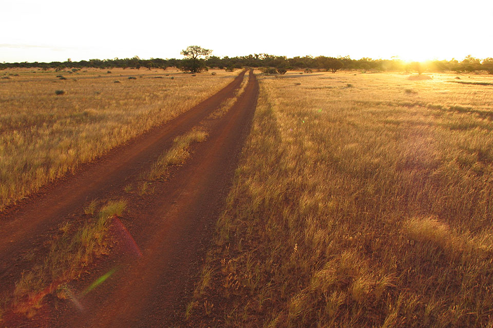 Grasslands at ex Doolgunna, part of the proposed Mount Augustus to Mulga national parks (photographer David Blood)