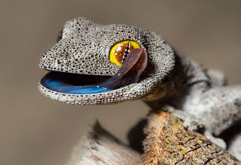 2_gecko.jpg
