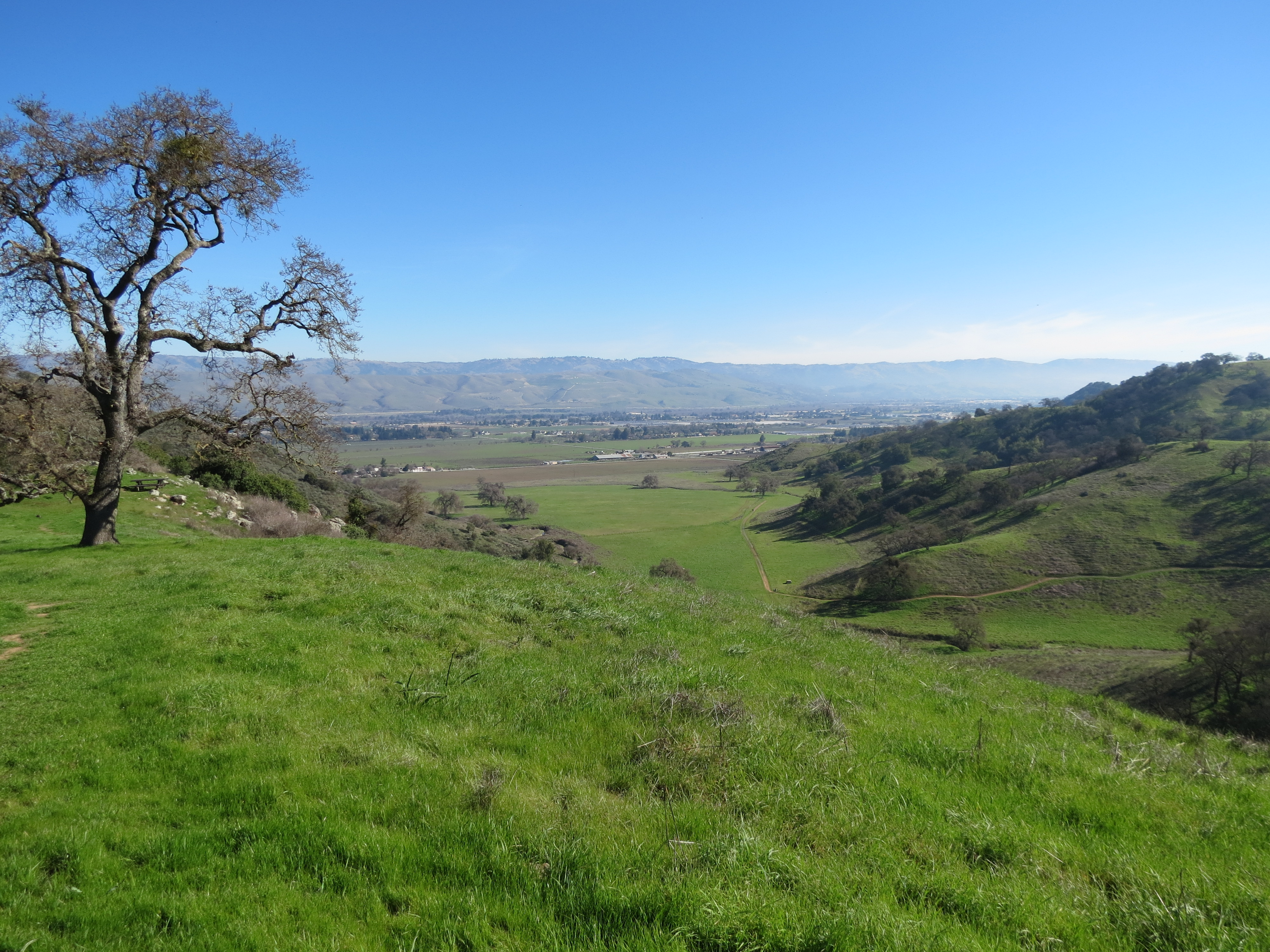 Coyote Valley View