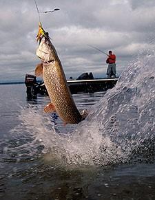 2015-pikefishing.jpg