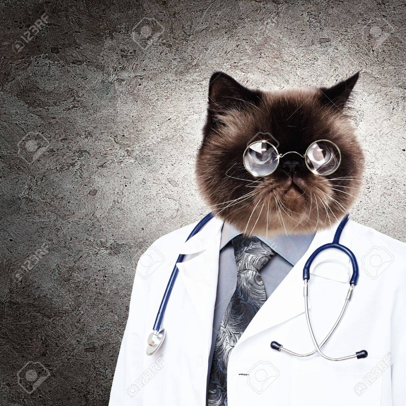 18747727-funny-fluffy-cat-doctor-in-a-robe-and-glasses-collage-Stock-Photo.jpg