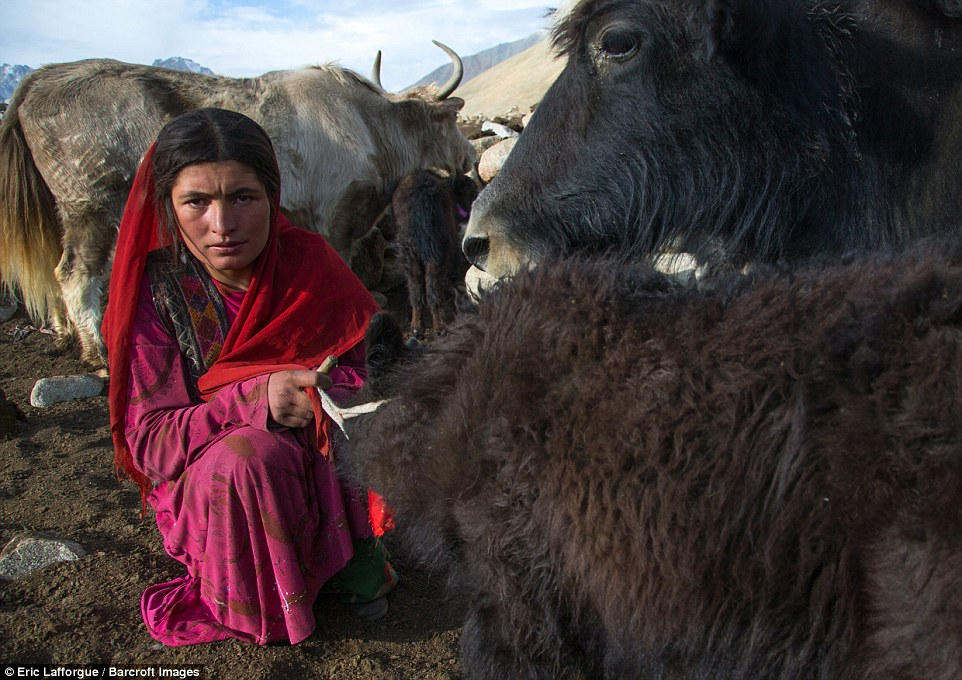 A Wakhi nomad woman with her yak in Afghanistan. Photographer Eric Lafforgue visited these little-known lands in August to see the land the time forgot