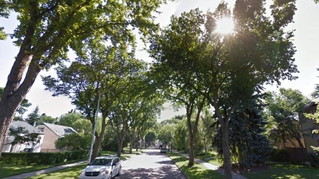 belgravia-trees-street.jpg