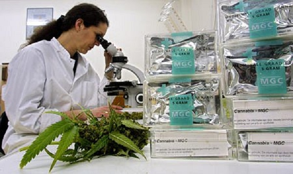 Cannabis_Research_and_Studies_pic.jpg