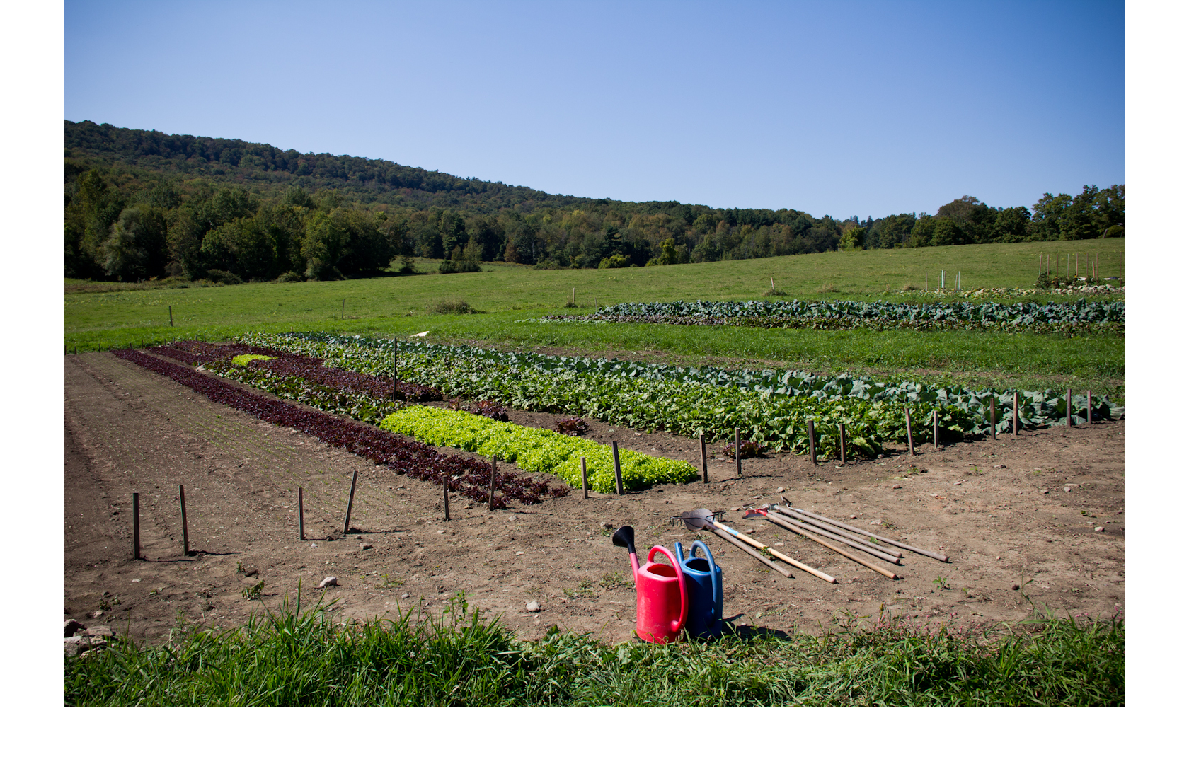 ASGT_FL_HighRes_Woven-Roots-Farm-Tyringham_Credit-Alexander-Boll.png