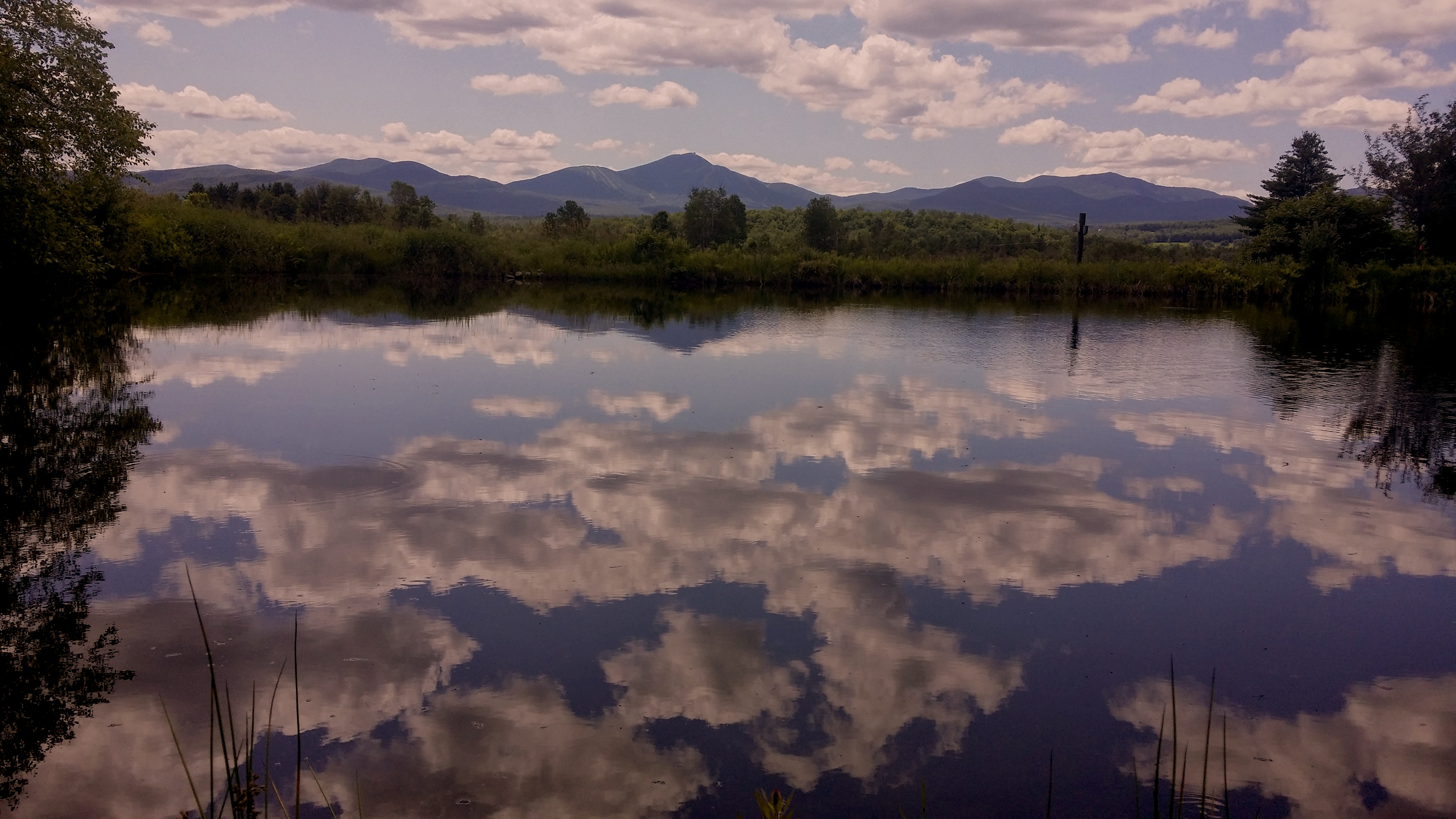20140711_Pond_under_clouds_copy.jpg