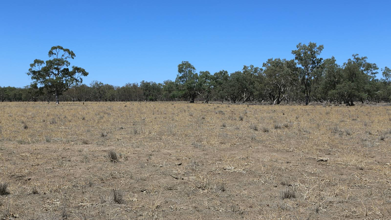 New $20 million for drought-affected farmers to access NSW water infrastructure funding