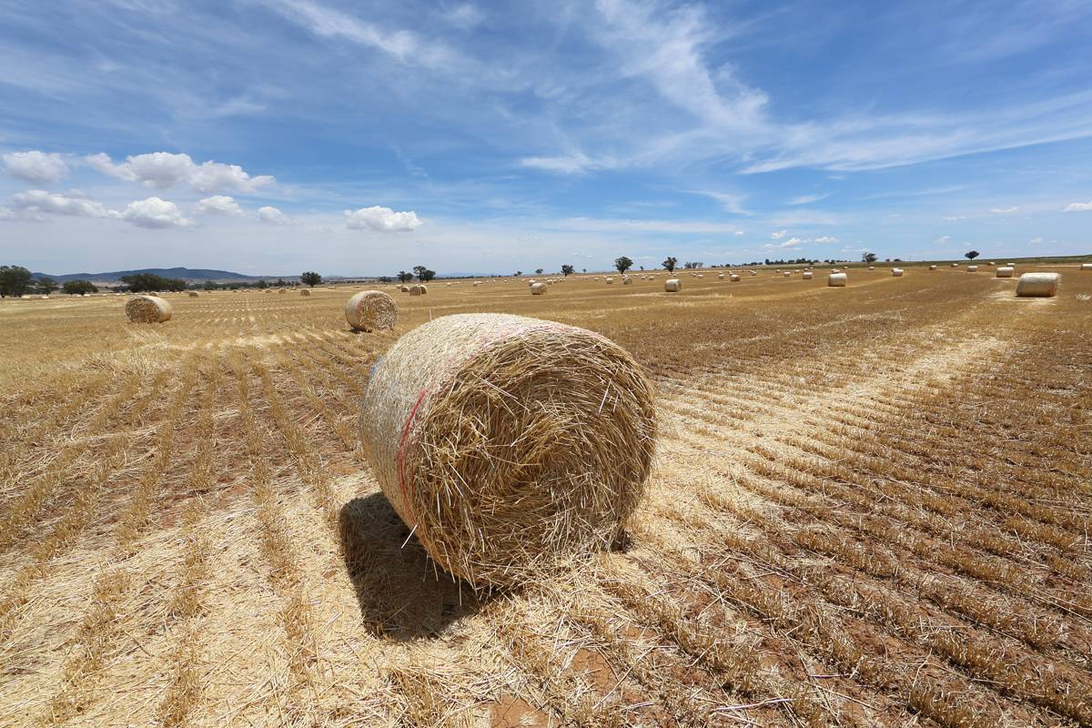 Agricultural Competitiveness White Paper – Stronger farmers, stronger economy