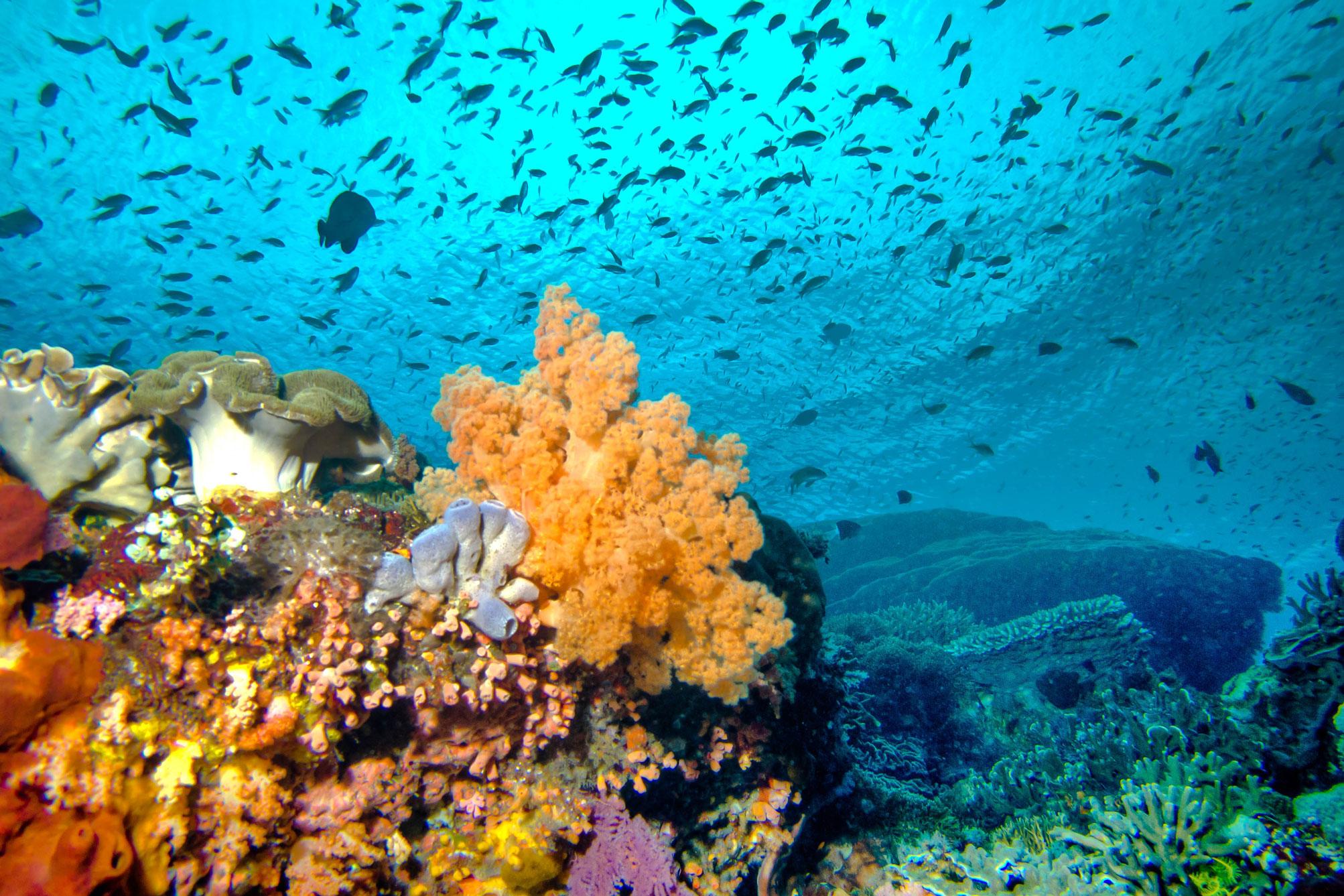 mega-theme-demo-coral-reef-1.jpg