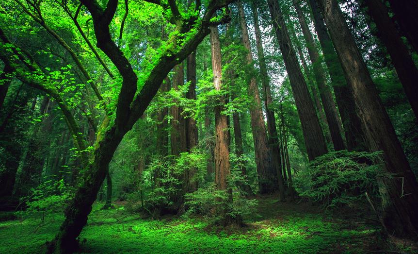AmazonDeforestation.png