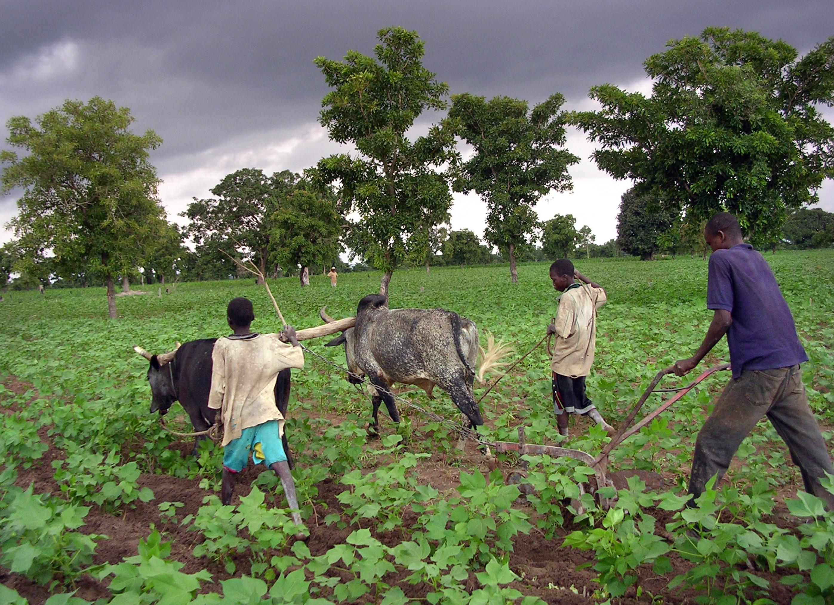 KenyaGMOBan.jpg