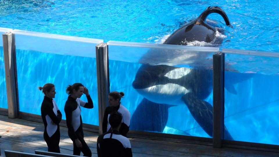ORCAAct.jpg