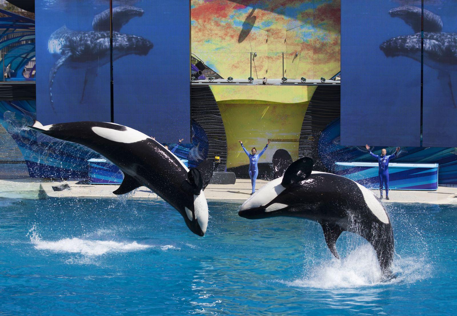 SeaWorldEndsKillerWhaleShows.jpg