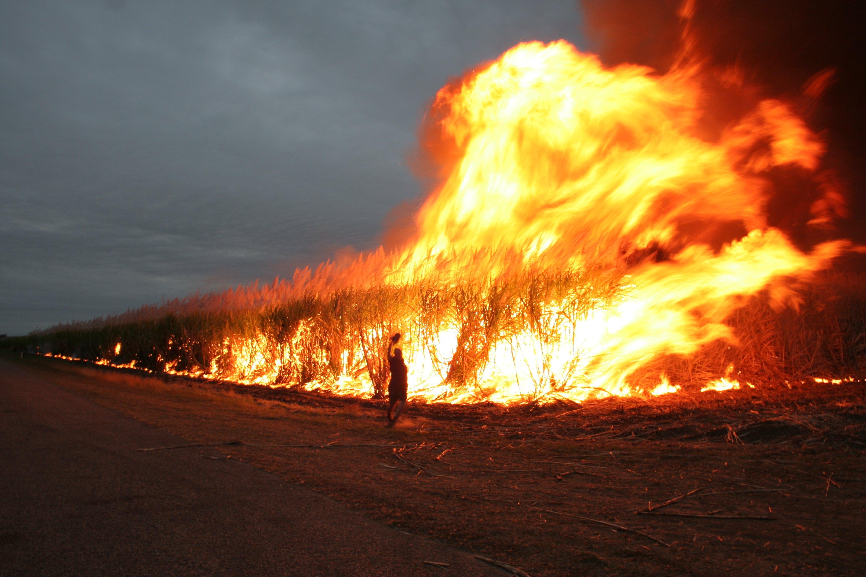 cane_burning.jpg