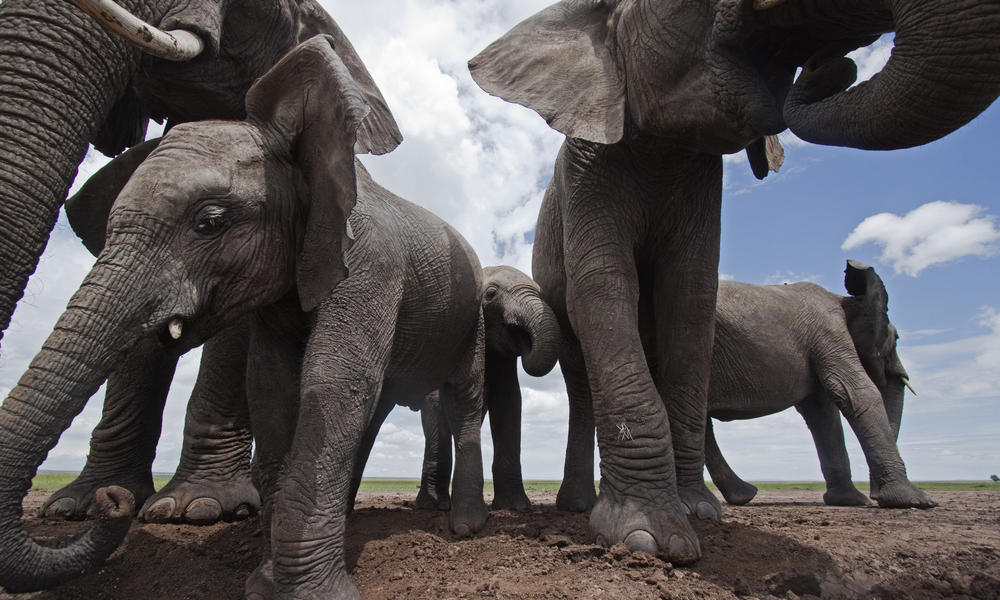 elephants_8.1.2012_whytheymatter2_XL_287397.jpg