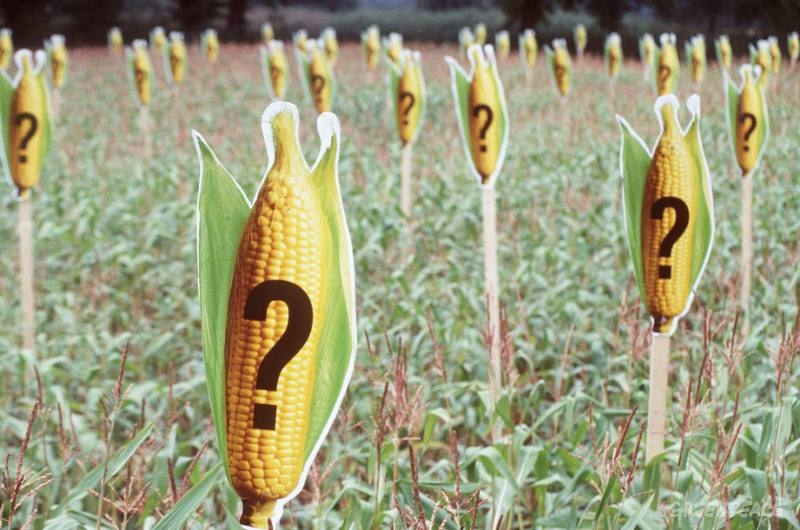 greenpeace-marks-a-maize-field.jpg
