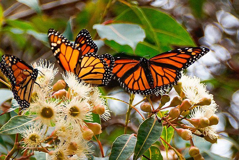 monarch-butterfly-sanctuary.jpg