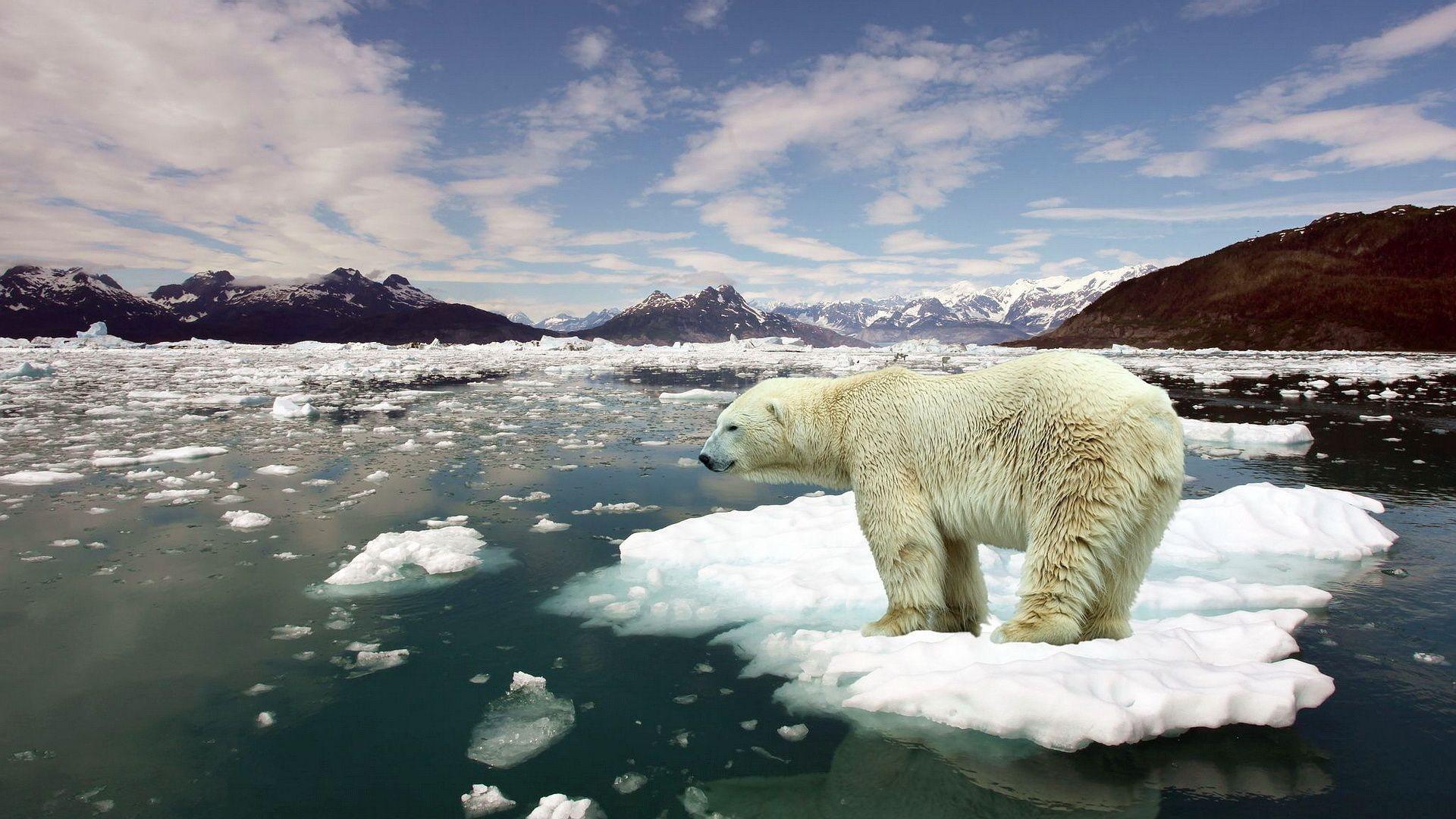 7004609-stop-global-warming.jpg