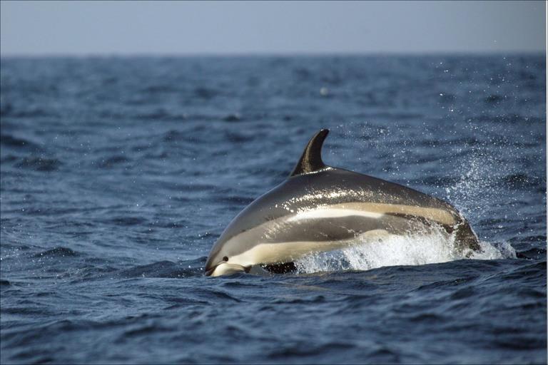 the-atlantic-ocean-dolphins.jpg
