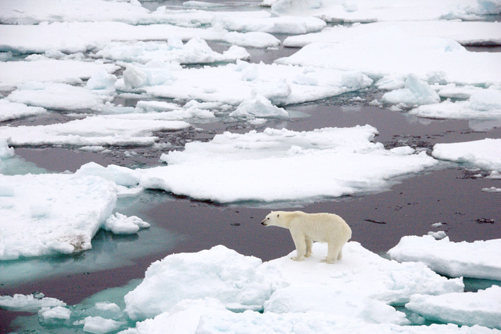 sea_ice_polar_bear.jpg