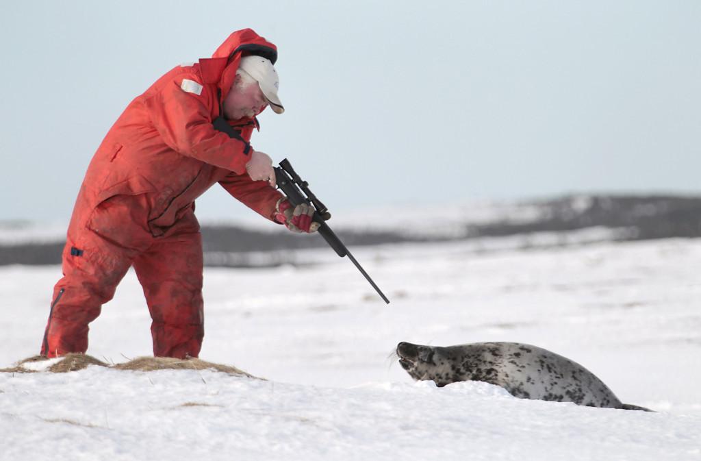 2011-02-24-10-21-06-sealhunt.jpg