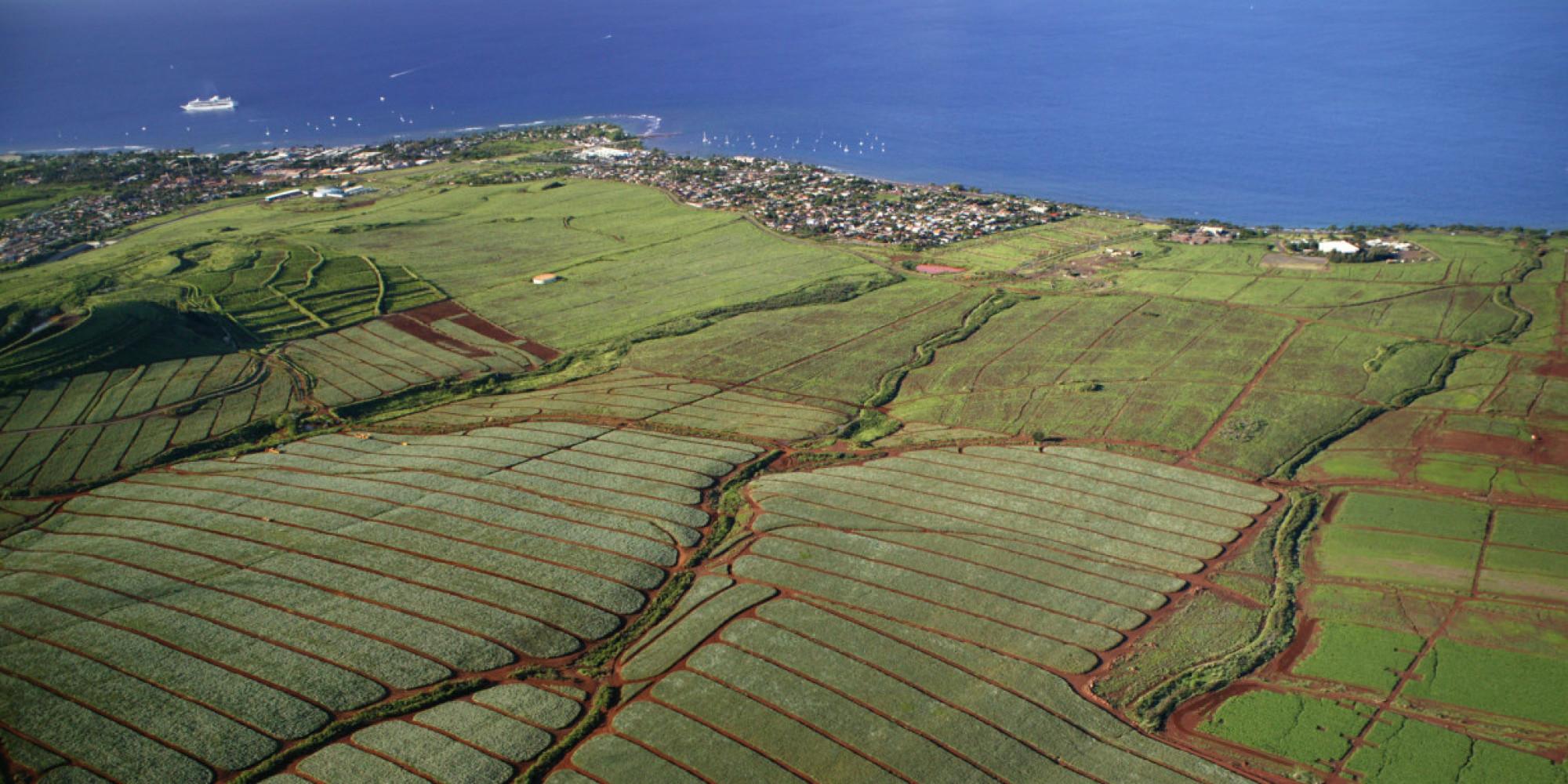 HawaiiGMOFree.jpg