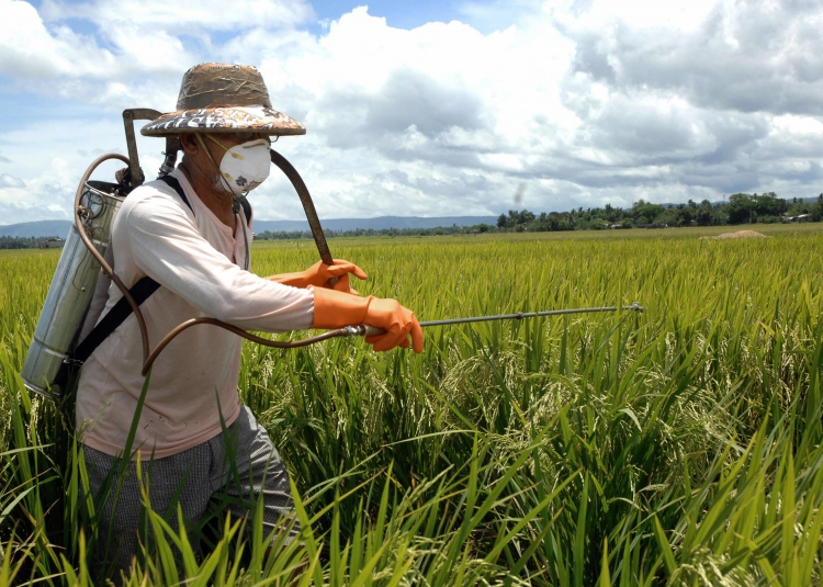 OgunquitBansPesticides.jpg