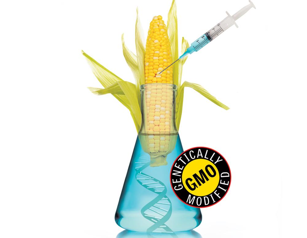 GMOStomachBacteria.jpg