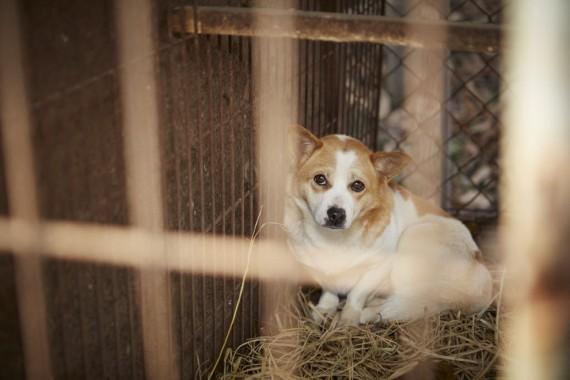 DogsRescuedKorea.jpg