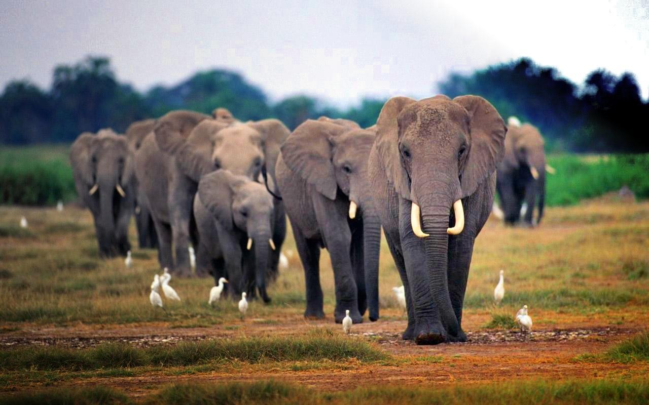 elephantsafrica31815.jpg
