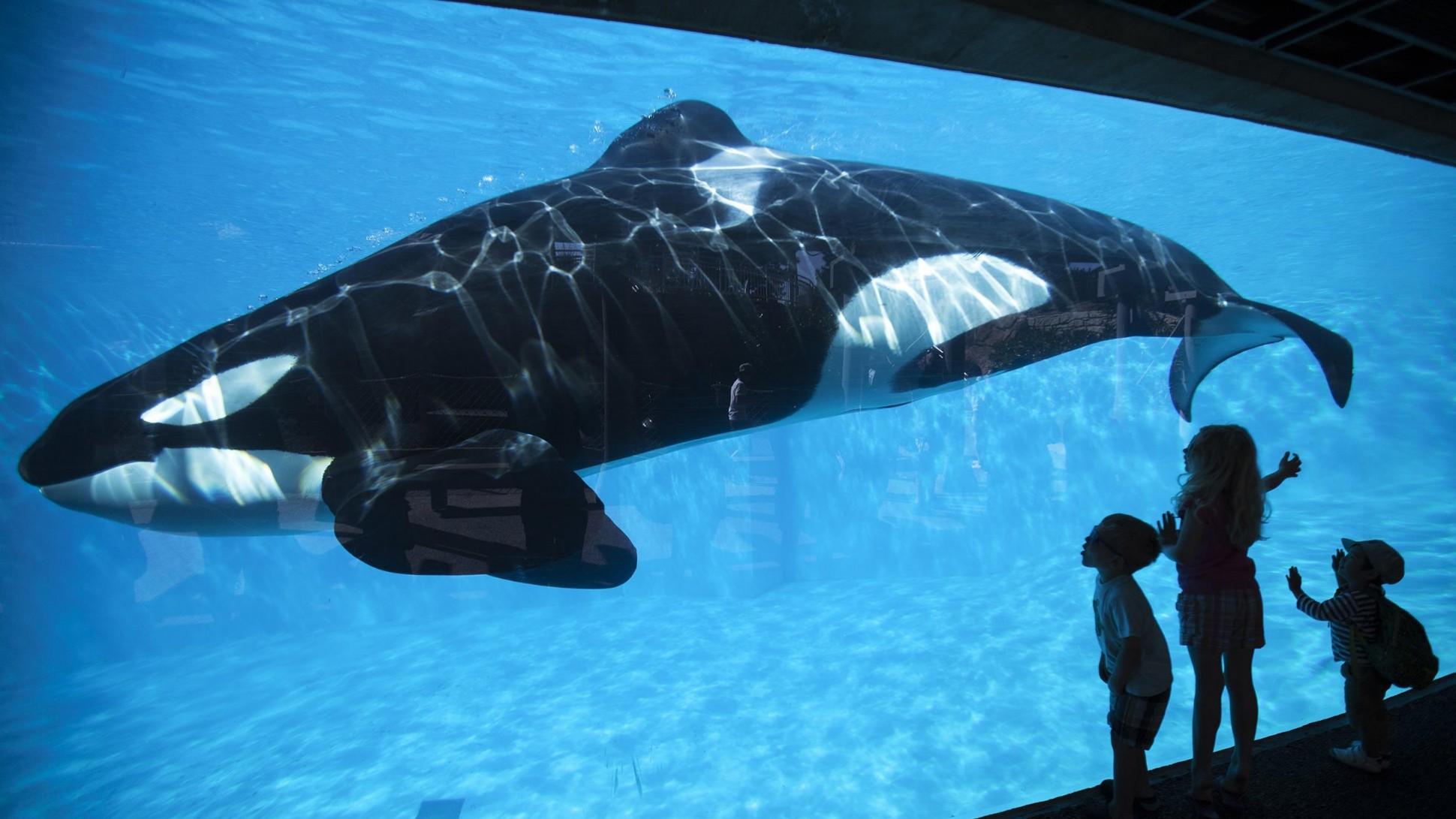 SeaWorldSued.jpg