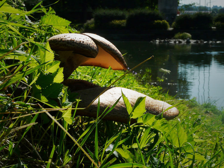 Fungus052715.jpg