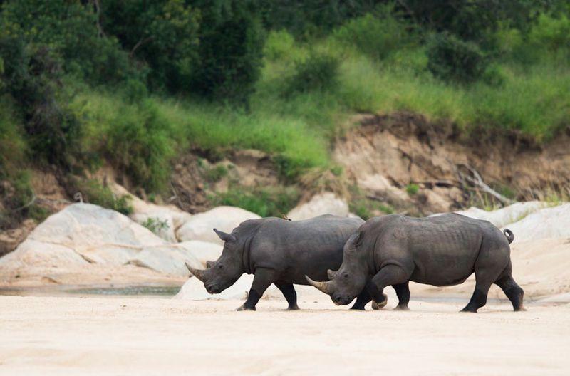 RhinoPoaching.jpg