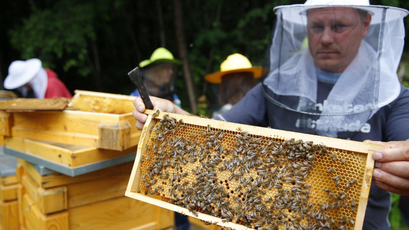 BeeColonies72815.jpg