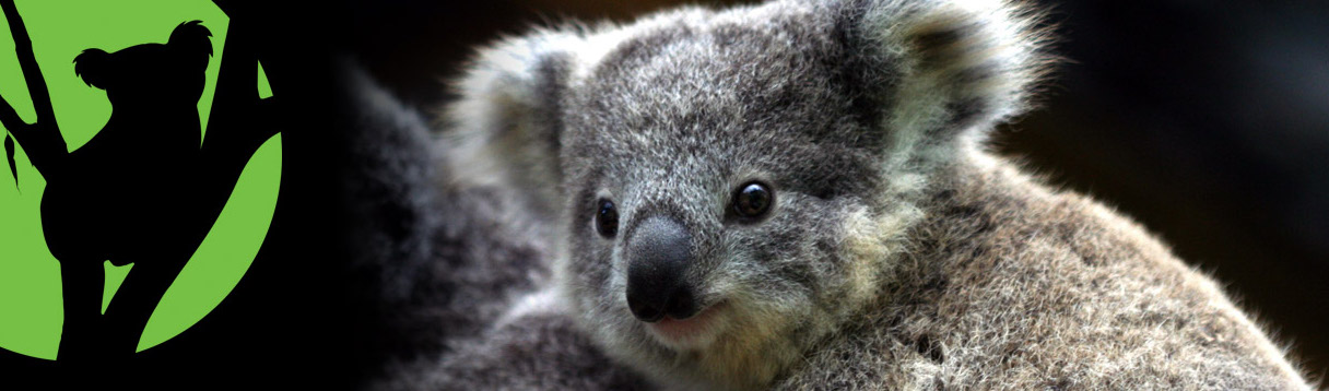 Koalas need trees