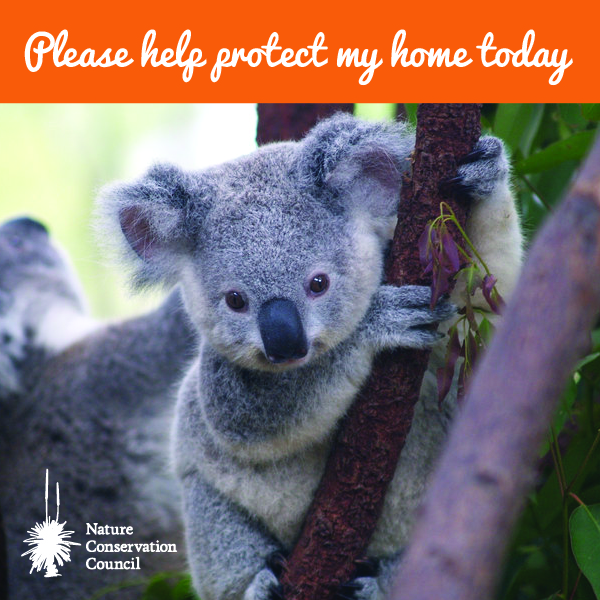 Koala with text 'please help protect my home today'