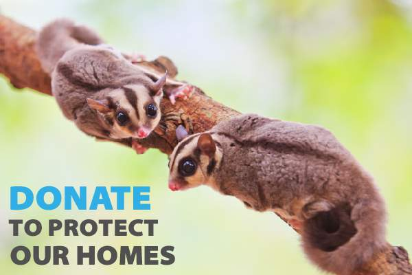 donate_to_protect_our_homes.jpg